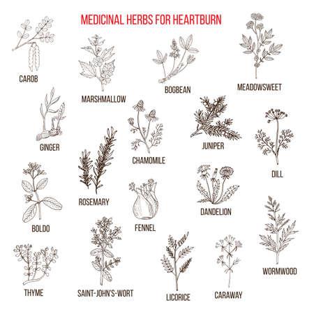 Beste kruidengeneesmiddelen voor maagzuur