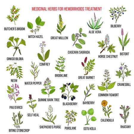 Best herbal remedies for hemorrhoids