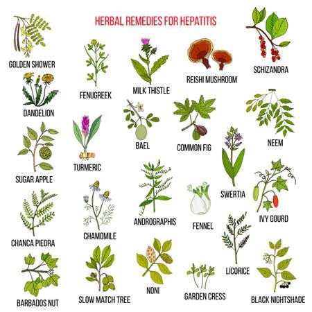 Los mejores remedios herbales para la hepatitis Foto de archivo - 74425777