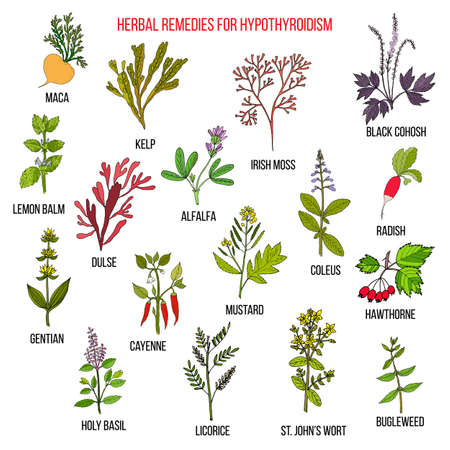 Best herbal remedies for hypothyroidism