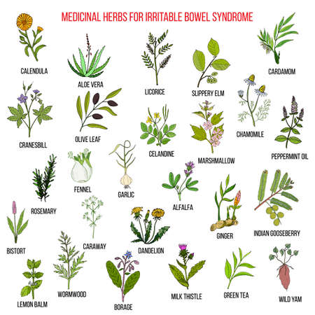 bowel: Best herbs for irritable bowel syndrome IBS