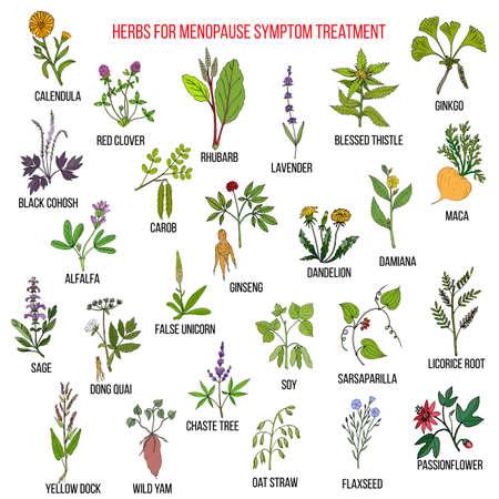 Las mejores hierbas para el tratamiento de los síntomas de la menopausia Ilustración de vector