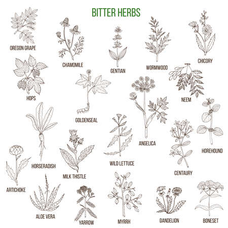 Bitter herbs collection Stock Vector - 74473880