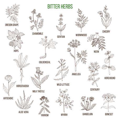 Colección de hierbas amargas Foto de archivo - 74473880