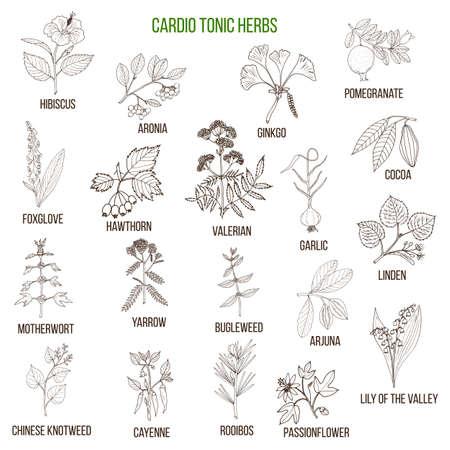 Meilleures herbes pour cardio-tonique