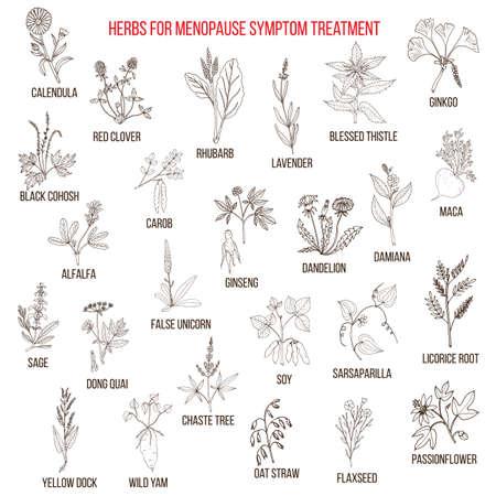 Beste kruiden voor menopauze symptoombehandeling. Hand getrokken set van geneeskrachtige kruiden
