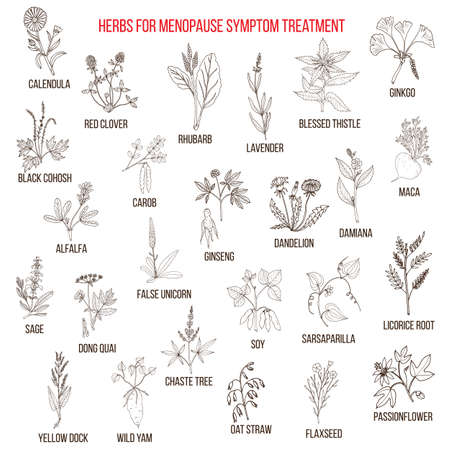 Best herbs for menopause symptom treatment. Hand drawn set of medicinal herbs Vettoriali