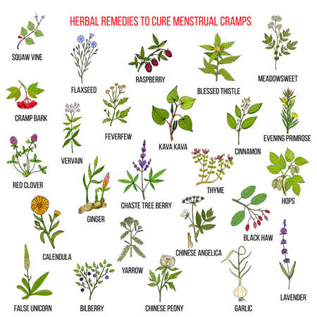 Best herbs for menstrual cramps treatment Иллюстрация
