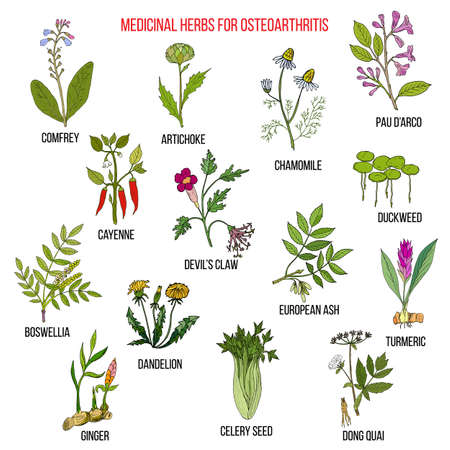 Best medicinal herbs for osteoarthritis. Hand drawn set of medicinal herbs