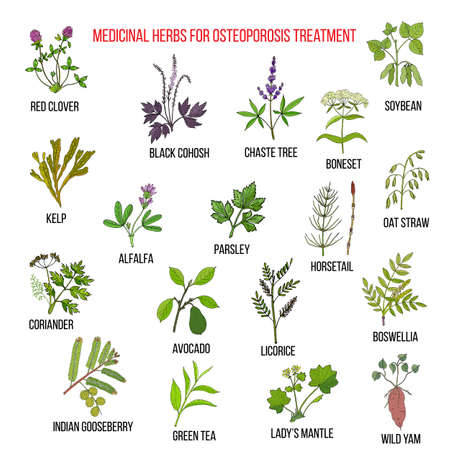 Best medicinal herbs for osteoporosis. Hand drawn set of medicinal herbs