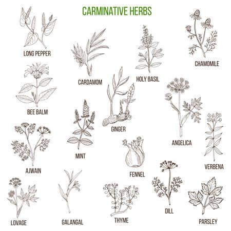 駆風ハーブ。薬用植物の手描きベクトルを設定  イラスト・ベクター素材