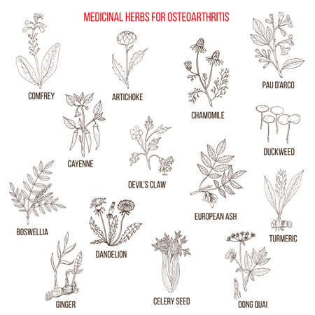 Best medicinal herbs for osteoarthritis