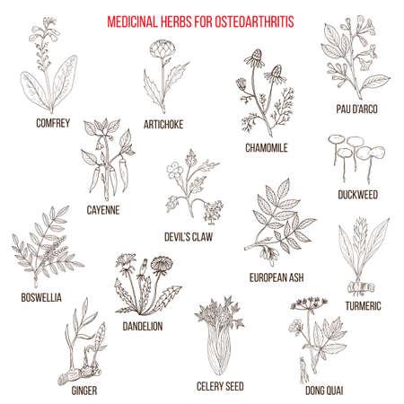 Mejores hierbas medicinales para la osteoartritis Ilustración de vector