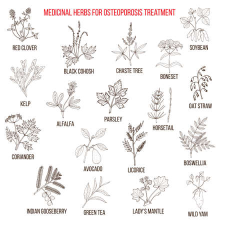 wild yam: Best medicinal herbs for osteoporosis. Hand drawn set of medicinal herbs