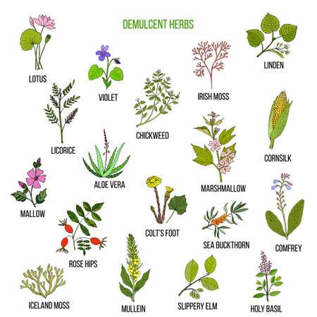 Demulcent herbs. Hand drawn vector set of medicinal plants Vettoriali