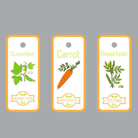 broad: Set of vector labels with hand drawn vegetables. Can be used for restaurant menu, farmers market and organic food store