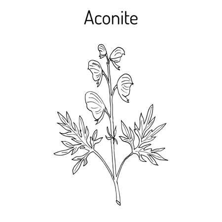 Aconite Aconitum napellus , flowering plant