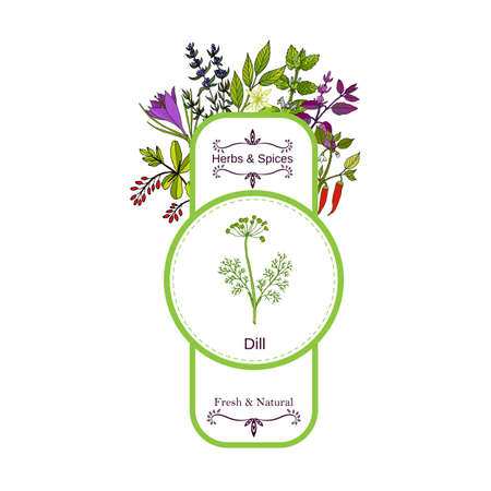 Vintage herbs and spices label collection. Dill hand drawn vector illustration Illustration