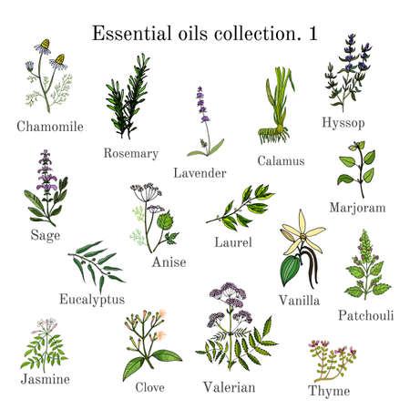 エッセンシャル オイル植物カモミール、ローズマリー、ラベンダー、ショウブ、ヒソップ、セージ、アニス、ローレル、マジョラム、ユーカリ、バ