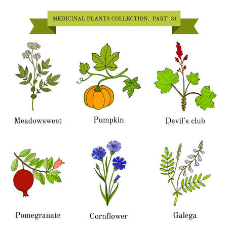 pomergranate: Vintage collection of hand drawn medical herbs and plants, meadowsweet, pumpkin, devil club, pomergranate, cornflower, galeda. Botanical vector illustration
