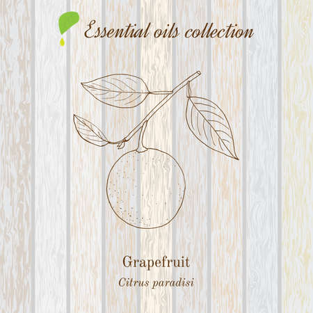 Pure essential oil collection, grapefruit. Wooden texture background. Vector illustration