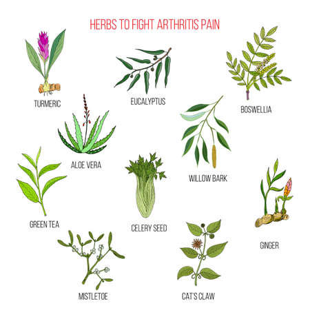 Herbs to fight arthritis pain turmeric, eucalyptus, boswellia, aloe vera, willow, celery, tea, mistletoe ginger cat claw Hand drawn botanical vector illustration Ilustração