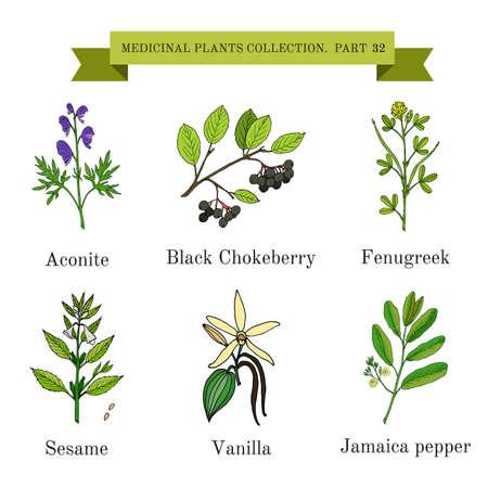 医療ハーブや植物、トリカブト、ブラックチョークベリー、フェヌグ リーク、胡麻、バニラ、ジャマイカのコショウ、手のヴィンテージ ・ コレク
