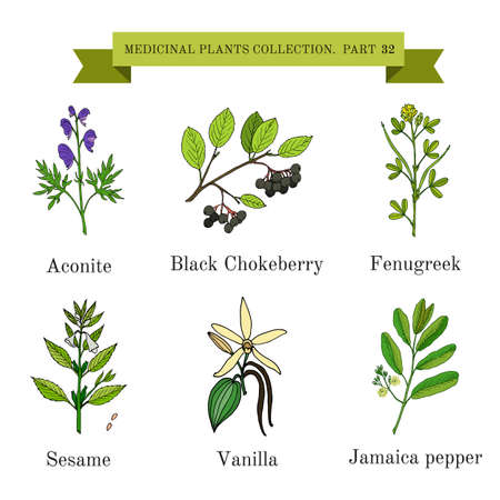 Vintage collection of hand drawn medical herbs and plants, aconite, black chokeberry, fenugreek, sesame, vanilla, jamaica pepper. Botanical vector illustration Ilustrace