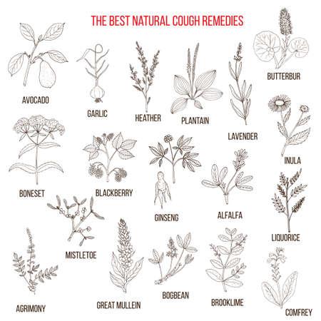 Natürliche Kräuter für Husten Heilmittel. Hand gezeichnet botanische Vektor-Illustration Vektorgrafik