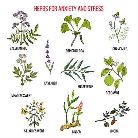 不安治療ハーブ コレクションです。手描き植物のベクトル図