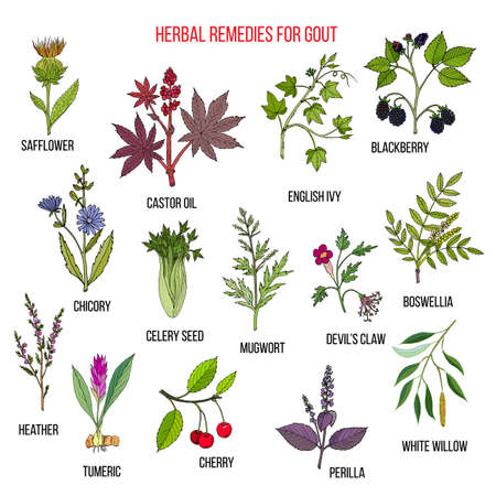 Collection of natural herbs for gout. Hand drawn botanical vector illustration Illustration