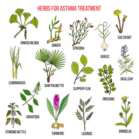 Natural herbs collection for asthma treatment. Hand drawn botanical vector illustration Illustration