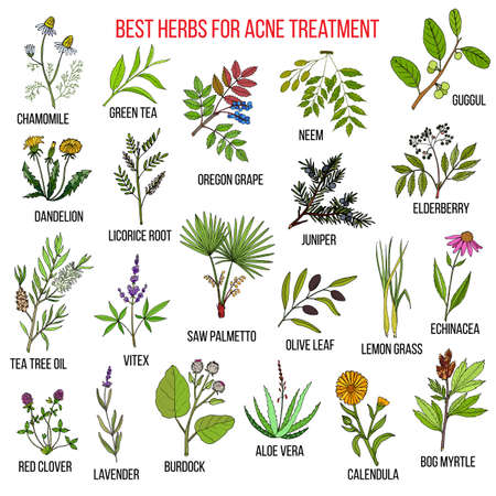 Collection of herbs for acne treatment. Hand drawn botanical vector illustration
