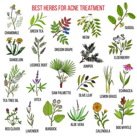 Verzameling van kruiden voor acne behandeling. Hand getekende botanische vector illustratie