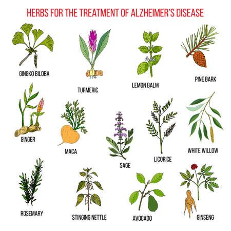Colección de hierbas para la enfermedad de Alzheimer. Dibujado a mano ilustración vectorial botánico Foto de archivo - 74328392