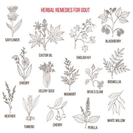 Colección de hierbas naturales para la gota Foto de archivo - 74575340