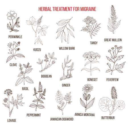 lovage: Collection of medicinal herbs for migraines relief Illustration