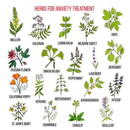 Collection of herbs for anxiety treatment Illustration