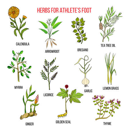 Collection of herbs for athlete foot