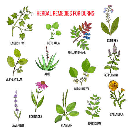 Collection of herbs for burns