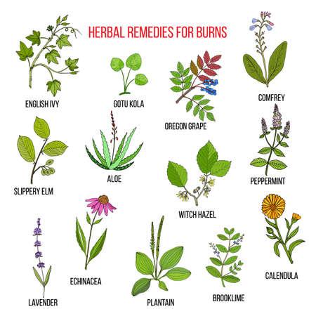 Colección de hierbas para quemaduras