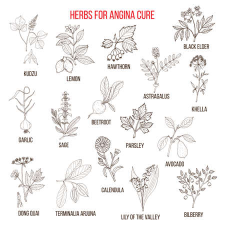 calendula: Collection of herbs for angina treatment
