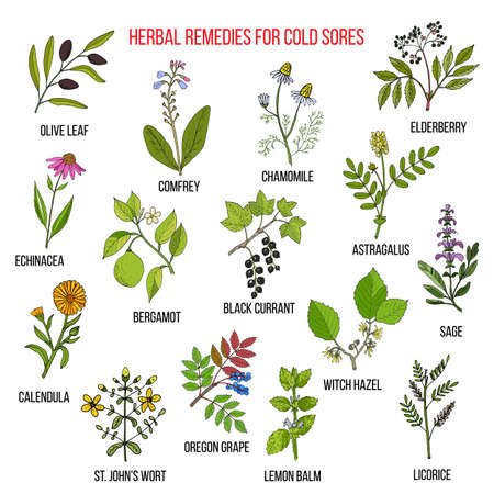 Best herbal remedies for cold sores. Hand drawn set of medicinal herbs