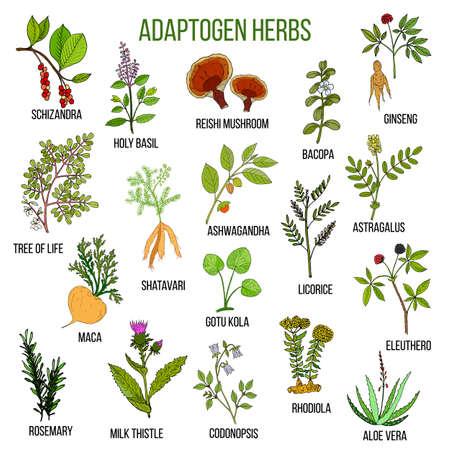 Zioła adaptogenne. Ręcznie rysowane zestaw roślin leczniczych
