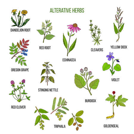 Alterative herbs. Hand drawn set of medicinal plants