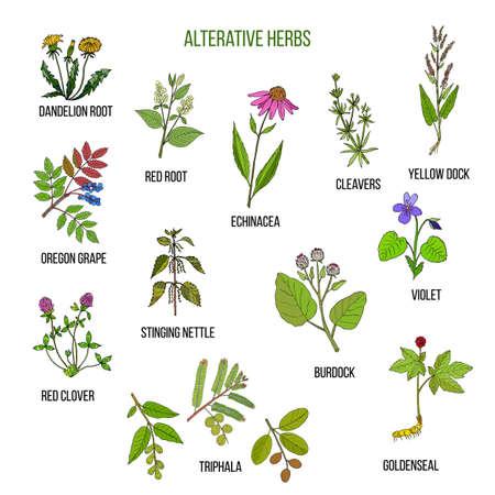 Alterative herbs. Hand drawn set of medicinal plants
