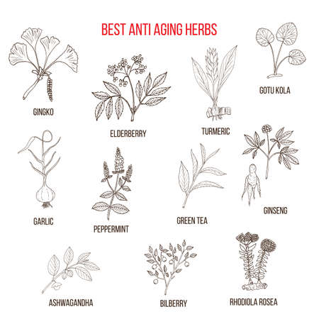 antiaging: Collection of anti-aging herbs Illustration