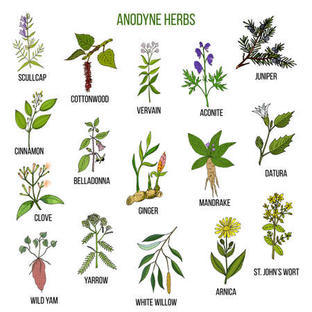 yarrow: Anodyne herbs. Hand drawn set of medicinal plants