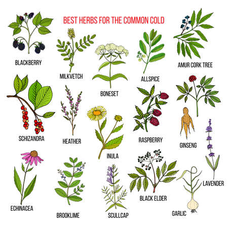 heather: Best herbs for common cold