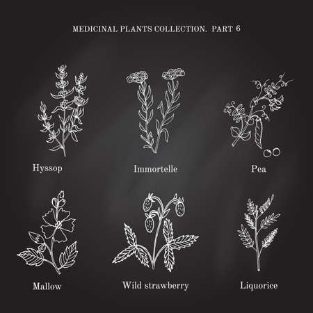 Vintage collection of hand drawn medical herbs and plants hyssop, immortelle, pea, mallow, wild, strawberry, liquorice